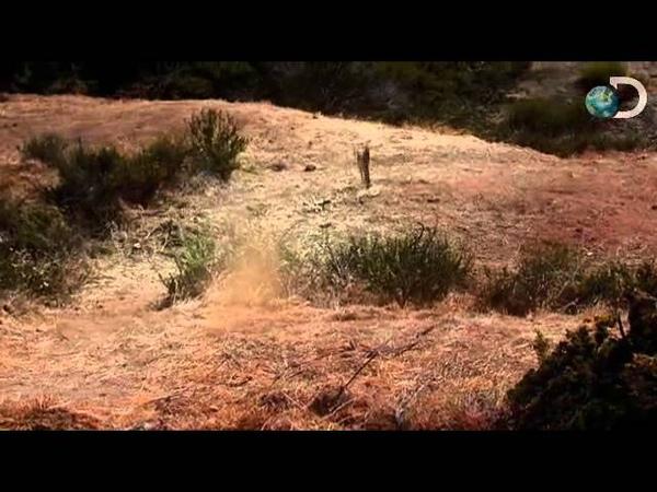 Dinosaur Revolution - Deadly Tail Whip
