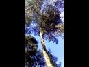 Троицкая обрядовая песня Как у лесе 2 берёзки вместе в сосновом бору