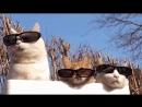 Поддержим Котиков в сумке
