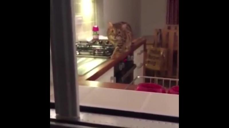 Кот крадется хорошее настроение юмор смешное домашнее видео охотник хищник на охоте киса кошка забавное животное дом