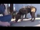 Красивая история о спасение бездомной собаки, людьми с большими сердцами. Берегите животных