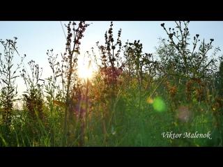 Природа. Травы. Пение птиц. Музыка. Релакс. Медитация. Звуки природы. Космос