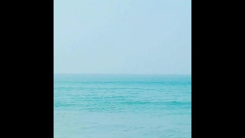 дельфин к нам приплыл