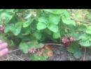Video-1529401788 (1)