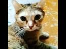 Кошка Ева.😍😍😍😍