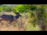 Фотограф показал сафари в Ботсване в гипнотическом таймлапс-видео.