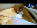 кошка-матершинница