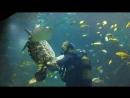 Кормление рыбок и танцы с черепахой