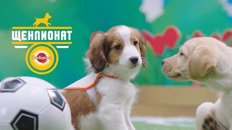 PEDIGREE® Щенпионат. Спорт для настоящих щенков