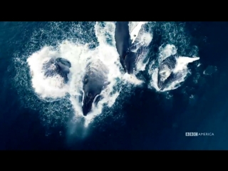 Planet Earth_ Blue Planet II _ Radiohead  Hans Zimmer - (ocean) bloom _ BBC Ame