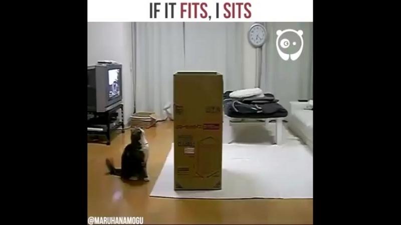 Кот – универсальное существо, помещается в любой емкости!