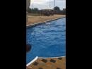 Турнир лагерный по плаванию