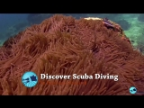 Bali Hai Scuba Discovery, Best Diving Spot in Lembongan Island