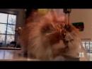 Смешных котиков вам в лену