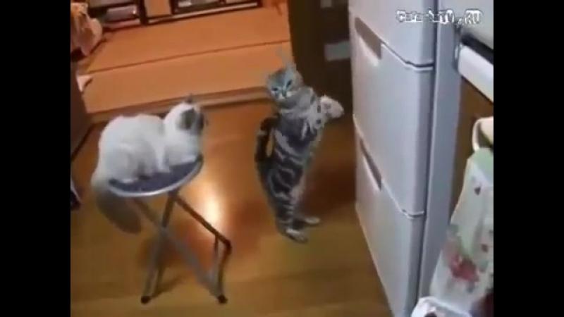 - О, холодильник, ты могуч...ты хранишь сосисок туч... Аль откажешь нам в ответе?...по сосисочке одной...