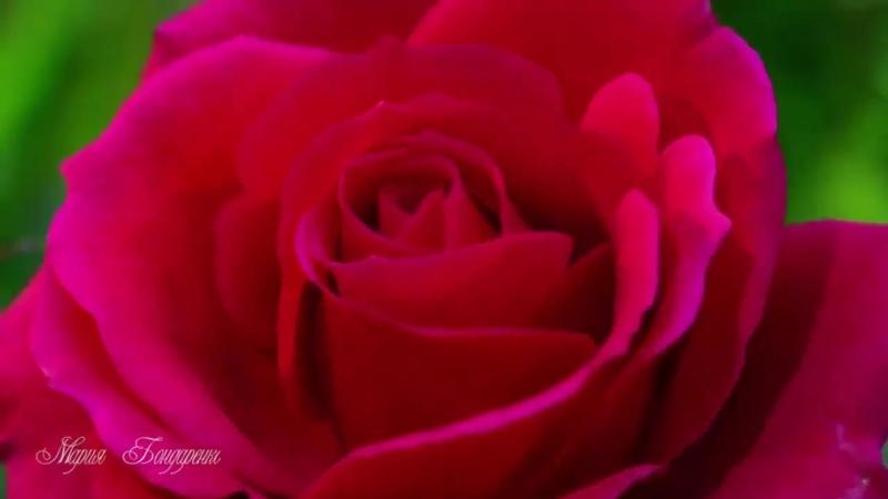 Релаксация ABON Благоухание цветов