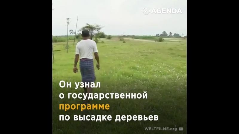Как один человек вырастил лес