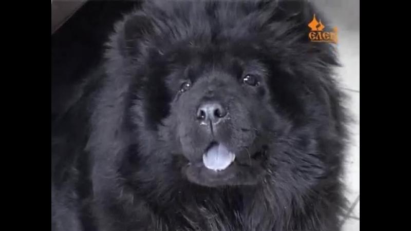 Елецкой городской станции по борьбе с болезнями животных исполнилось 60 лет
