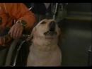 Т/С Злоключения Росинанта, моей любимой собаки 10 серия 2001г