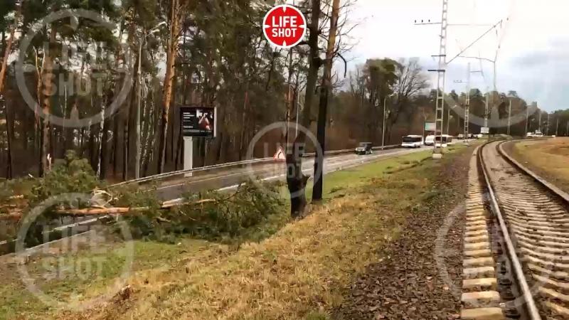 Водители из Барвихи в заточении Там ветром снесло дерево оно перегородило дорогу