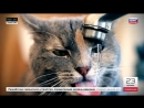 Гидрофильные коты и гидрофобные китайцы утренний эфир на Шаге России от 23 04