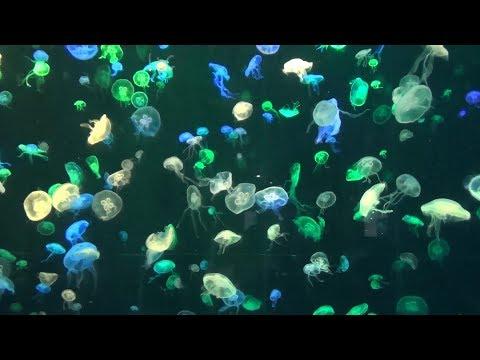 Океанариум в Чжухай Вы видели ламантинов и китовых акул Жизнь в Китае 136