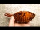 Жук Геркулес - цикл роста от личинки и до конца