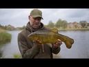 Urban Tench A Sight to Behold