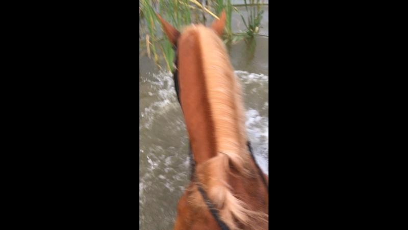 Пантонно конно водные процедуры
