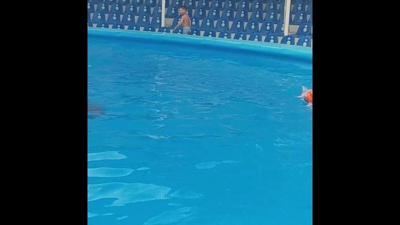 Семик на дельфине