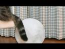 WTF кошка на качелях бьет в барабан