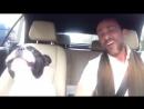 Поющая собака часть 1