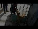 Собака застряла в заборе и как её спасали СМОТРЕТЬ ВСЕМ