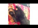 СМЕШНОЕ ВИДЕО ПРО КОШЕК 2017- FUNNY VIDEOS ABOUT CATS 2016