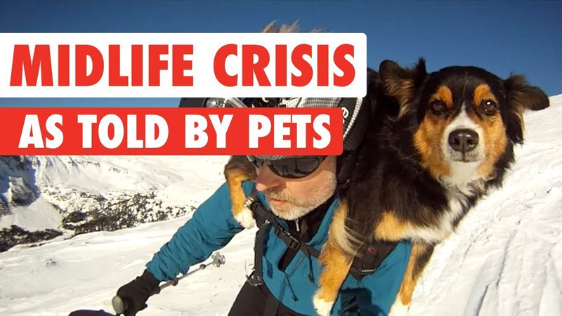 Signs You Might Be Having a Midlife Crisis As Told By Pets