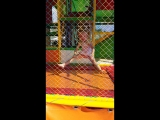 #батут #шпагат #прыжки #ЛюбимаяМоя #КакВсегдаНаВысоте