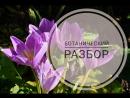 Осенний крокус или Безвременник. Разбор цветка.Видеоразбор цветов от Елены Гуреевой