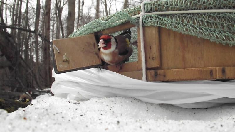 Птицы отнятые у торгашей