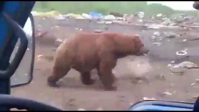 Это Россия, детка! Медведи на Камчатке.