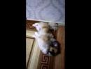 Мой песик спит