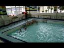 Открытый урок в бассейне 20 октября 2017 (часть 2)