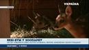 Весняний приплід Черкаського зоопарку став рекордним серед українських звіринців