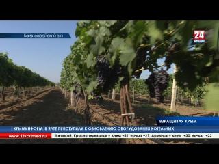Воспользоваться грантовой поддержкой или встать на ноги самостоятельно. Как развиваются крымские аграрии?