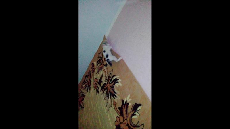 Соня - кот паук