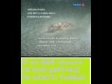 Уста. Зинаида Миркина Григорий Померанц Уралович. КОКЫМШО. vk.comvideo138772802_456240025.