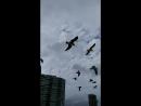 The gulls ensemble on Miami Beach