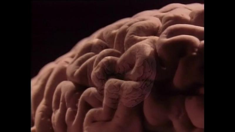 Атлас тела. Фильм 9. Мозг — кладовая сознания