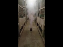Проведение дезинфекции курятника в домашних условиях и л ечения Однохлористым Йодом на 2 й день ВЫТЕГРА ВОЛОГОДСКАЯ ОБЛОСТЬ