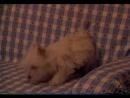 Т/С Злоключения Росинанта, моей любимой собаки 2 серия 2001г
