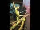 игривая ящерка